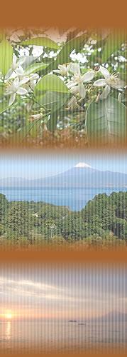 みかんの花・富士山